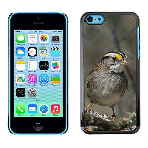 Premio Sottile Slim Cassa Custodia Case Cover Shell // F00023903 songbird Gris // Apple iPhone 5C