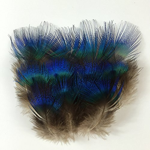 Sowder 50pcs Blue Peacock Plumage Feathers 1-3 Inches for Home Wedding Decoration (Peacock Feathers Decoration)