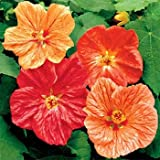 Outsidepride Abutilon Seeds Mix - 1000 Seeds