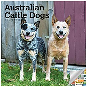 Australian Cattle Dogs Calendar 2020 ACD Wall Calendar Bundle with Over 100 Calendar Stickers 3