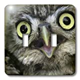 3dRose LLC lsp_9927_2 Little Owl , Athena Noctua, Aragon Spain Europe Double Toggle Switch