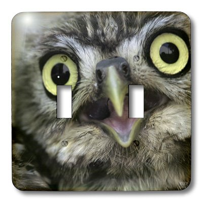 3dRose LLC lsp_9927_2 Little Owl , Athena Noctua, Aragon Spain Europe Double Toggle Switch by 3dRose