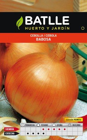 Kit de Trasplante Vitaminas: Puerro, Cebolla y Espinaca: Amazon.es: Jardín