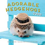 Adorable Hedgehogs 2020: 16 Month Calendar  September 2019 Through December 2020