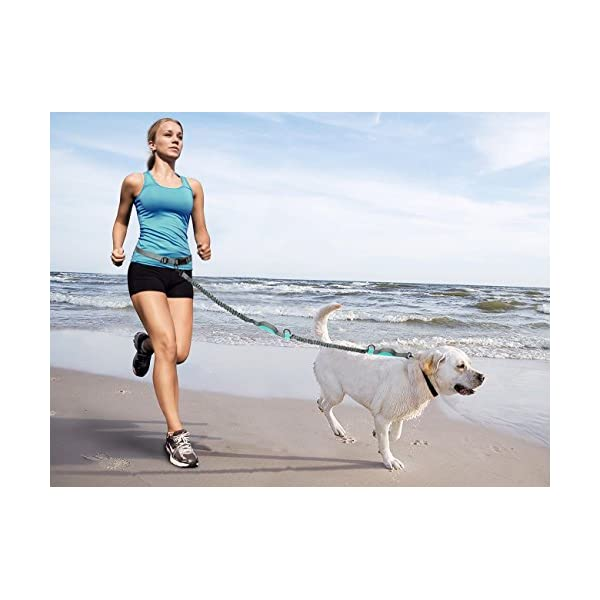 SHINE HAI Retractable Hands Free Dog Leash with Dual Bungees for Dogs up to 150lbs, Adjustable Waist Belt, Reflective Stitching Leash for Running Walking Hiking Jogging Biking 7