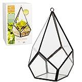 Glass Tear Drop Terrarium, Succulent & Hanging Air Plant