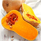 Package of 45 Seeds, Waltham Butternut Winter Squash (Cucurbita pepo) Non-GMO Seeds by Seed Needs