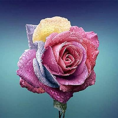 Seed 100 Pcs Colorful Rose Bonsai Rare Color Rainbow Flower Beautifying Garden Flowers Bonsai
