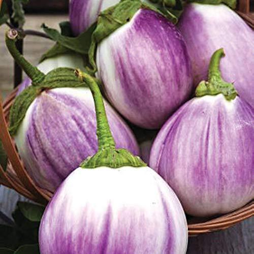 - NIKITOVKASeeds - Eggplant - Aubergine Rotonda Bianca Sfumata Di Rossa - 50 Seeds - Organically Grown - Non GMO