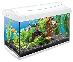 Aquarium komplettset f r einsteiger for Aquarium einsteiger