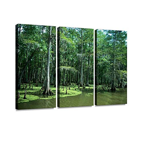 (Bayou with Cypress Trees. Print On Canvas Wall Artwork Modern Photography Home Decor Unique Pattern Stretched and Framed 3 Piece)