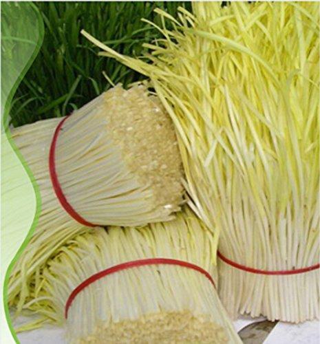 ADB Inc Yellow Chinese Chives Seeds
