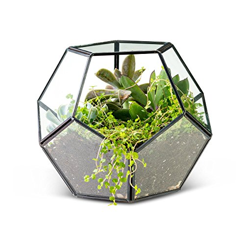 DIY Plants Geometric planter Modern Tabletop Black Glass Geometric Terrarium Container Window Sill Decor Flower Pot Balcony Planter Diy Display Box for Succulent Fern Moss Air Plants Miniature Fairy G for $<!--$24.99-->