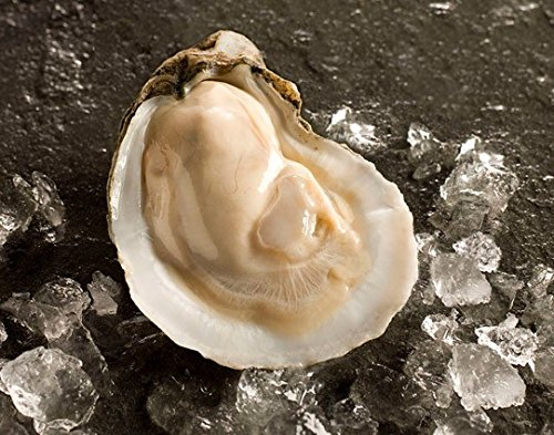 East Coast Oysters - Frozen on the Half Shell (12 Count) by Handy - Oysters Live