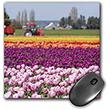 3dRose LLC 8 x 8 x 0.25 Inches Mouse Pad, Wa, La Conner. Skagit Valley Tulip Farm Stuart Westmorland (mp_96848_1)