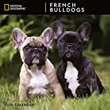 National Geographic French Bulldogs 2020 Wall Calendar