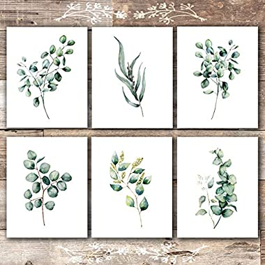Eucalyptus Leaves | Botanical Prints Wall Art (Set of 6) - Unframed - 8x10s