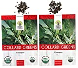 Organic Collard Greens (Champion) Seeds - 2 Seed Packets! - Over 200 Open Pollinated Non-GMO USDA Organic Seeds