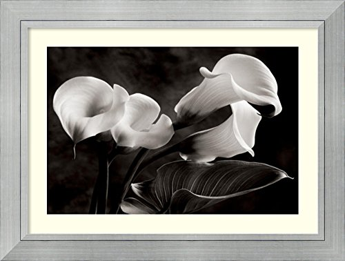 Framed Art Print 'Calla Lilies No. 1' by Sondra (Sondra Wampler Calla Lilies)