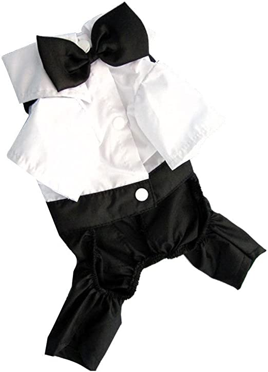 gevian Prince novio disfraz de traje de camisa de esmoquin con pajarita para perro de mascota Perro Gato: Amazon.es: Productos para mascotas