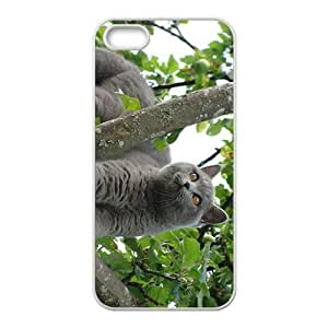 Cat Hight Quality Plastic Case for Iphone 5s by icecream design