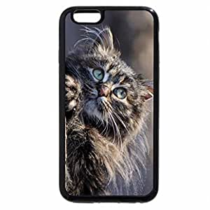 iPhone 6S Plus Case, iPhone 6 Plus Case, Cat