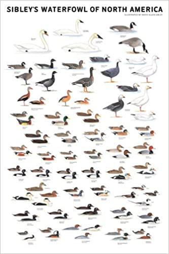 Sibley s waterfowl of north america david allen sibley