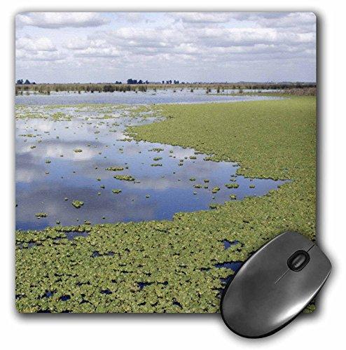 Danita Delimont - Argentina - Otamendi Natural Reserve, Argentina - SA01 MME0093 - Michele Molinari - MousePad (mp_85357_1)