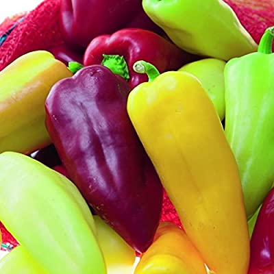 Pretty N Sweet Bell Pepper Seeds - 200+ Seeds - Delicious Sweet Peppers : Garden & Outdoor