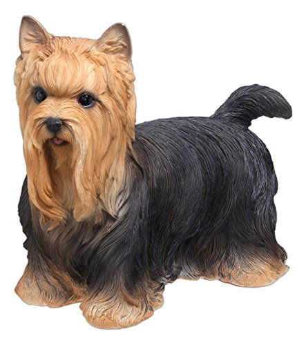 Nature's Gallery Life-Like Yorkshire Terrier 10