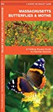 Massachusetts Butterflies and Moths, James Kavanagh, 1583554289