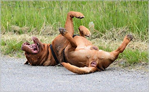 Home Comforts LAMINATED POSTER The Joke 5 Animals Poster Pri