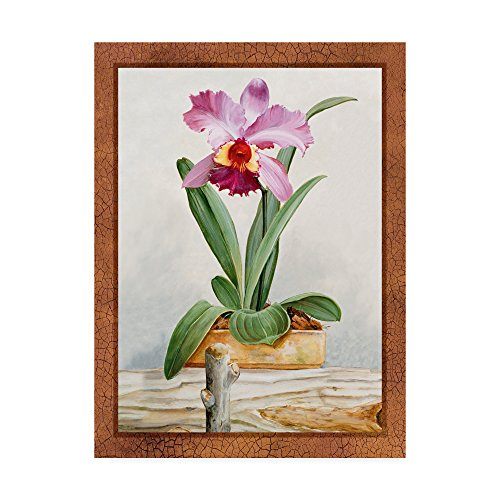 Orchids 4 by Lisa Audit, 18x24-Inch