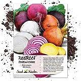 Seed Needs, Rainbow Beet Mixture (Beta vulgaris) 600 Seeds Non-GMO