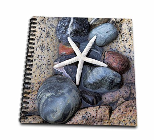 3dRose Andrea Haase Nature Photography - White Starfish On Pebble - Memory Book 12 x 12 inch (db_274825_2)