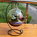 Zantec Creative Clear Glass Ball Vase Micro Landscape Air Plant Terrarium Succulent Hanging Flowerpot Container