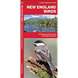 New England Birds: A Folding Pocket Guide to Familiar Species (Pocket Naturalist Guide Series)