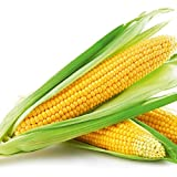 buy Gracefulvara 100PCS Vegetables Sweet Corn Seeds Home Garden Organic Yellow Corn Seeds now, new 2019-2018 bestseller, review and Photo, best price $3.39