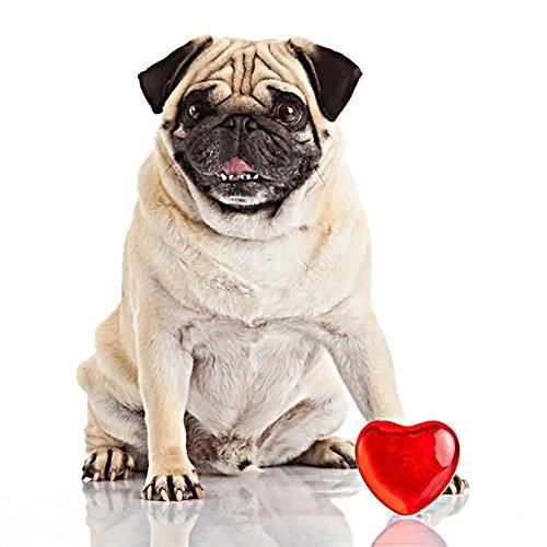 - LBgrandspec DIY Resin Diamond Painting Full Drill Animal Pug Dog Cross Stitch Home Decor Crystal Rhinestone Diamond Embroidery Paintings - Y024