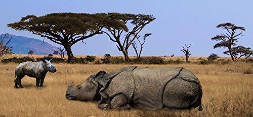 Home Comforts Acrylic Face Mounted Prints Pachyderm Rhino Africa Safari Big Game Safari Park Print 24 x 36. Worry Free Wall Installation - Shadow Mount is ()