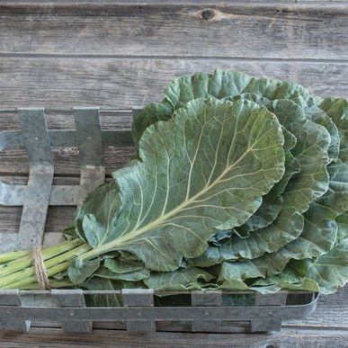 David's Garden Seeds Collards Tiger U3775Z (Green) 100 Hybrid Seeds