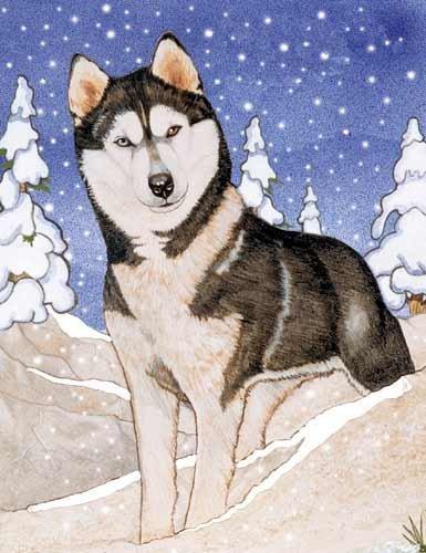 Husky Christmas Cards.Siberian Husky Christmas Cards 10 Holiday Cards With Envelopes Adorable
