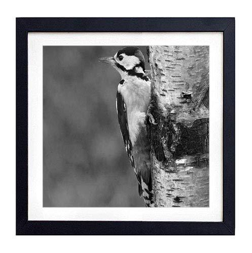 (GLITZFAS PRINTS Framed Wall Art - Woodpecker Bird Tree - Art Print Black Wood Framed Wall Art Picture for Home Decoration - 14