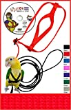 The AVIATOR Pet Bird Harness and Leash: Medium Red