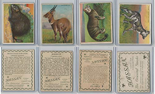 T29 Hassan, Animals, 1911, Brush Porcupine, Bushbuck, Caffre Cat, Cape Dog