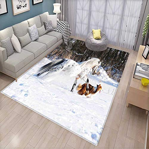 (Horses Bath Mats Carpet Legendary Appaloosa Pony and Sable Border Collie Runs Gallop in Winter Photo Print Door Mats for Inside Non Slip Backing Multicolor)