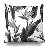 Ahawoso Throw Pillow Cover Square 20x20 Paradise Billbergia Strelitzia Reginae Blossom Known Crane Flower Exotic African Nature Bird Bloom Blooming Botanical Home Decor Cushion Case Pillowcase