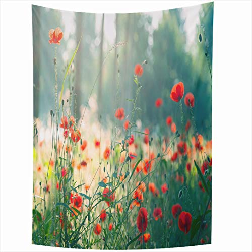 Ahawoso Tapestry 60 x 90 Inches Flower Red Poppies Forest Morning Nature Trees Parks Field Summer Poppy Tree Excursions Design Wall Hanging Home Decor Tapestries for Living Room Bedroom Dorm