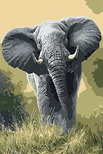 Diy Oil Painting, Paint by Number kit Elephant 16x20 inch Wooden Framed By Prime Leader