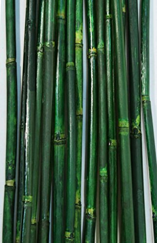 Green Floral Crafts Natural River Cane 6 Ft, Green, Pack of 20